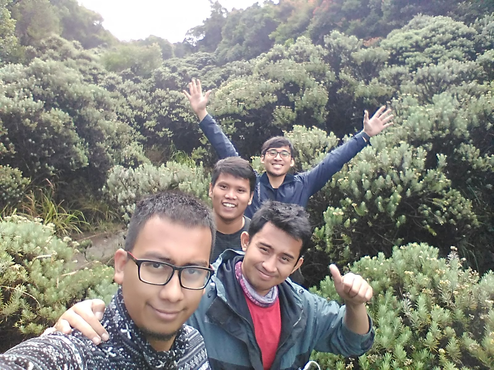 Padang Edelweis Credit by @HapeDimas